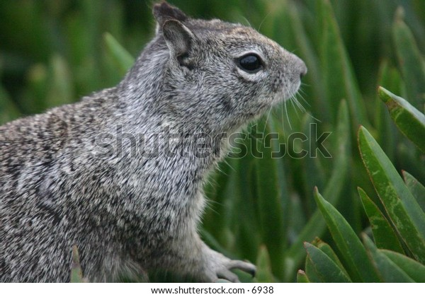 squirrel looking around