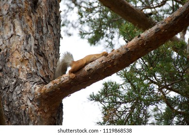 A squirrel lying on a branch