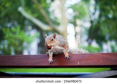 Squirrel at Madison Square park