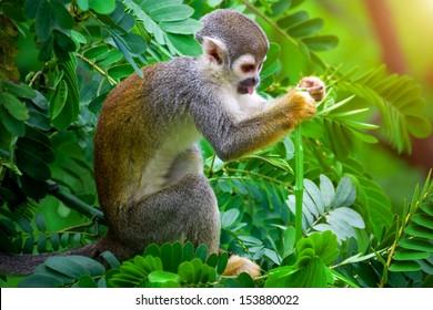 Imagenes Fotos De Stock Y Vectores Sobre Amazon Rainforest Jungle