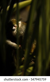 Squirrel Monkey looking down and sleeping in a dark environment
