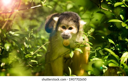Squirrel monkey looking out from green lush background. The image has lens flare