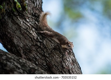 squirrel in nature
