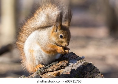 Squirrel near a tree, Russia, Moscow, park, autumn