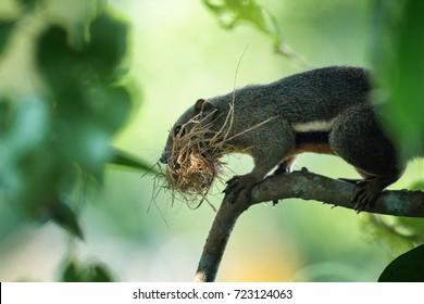 Squirrel Nest in Making