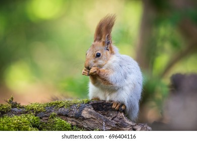 The Squirrel an Nut