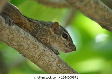 squirrel on a branch closeup