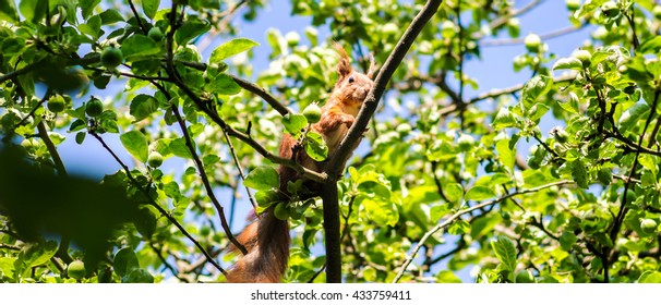 Squirrel on branch of tree in summer time