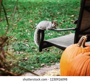 Squirrel on lawnchair