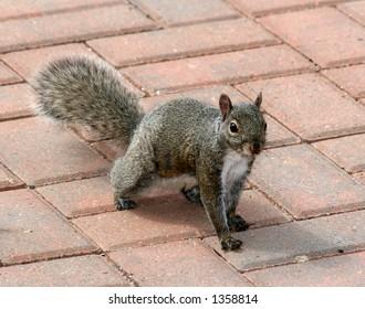 Squirrel on a patio