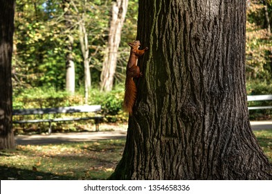 Squirrel on tree with acorn