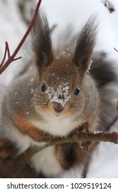squirrel on a tree during a snowfall