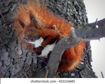 Squirrel on a tree in Lviv, Ukraine