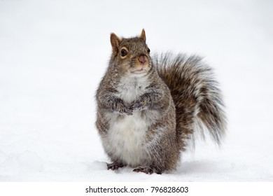 Squirrel Outside During Winter