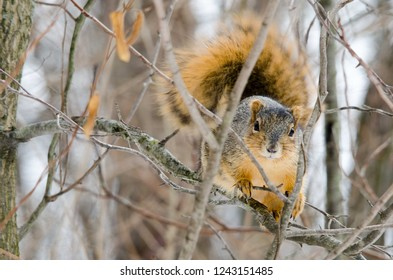 A squirrel peeks through the tree's
