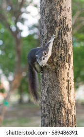 The squirrel perched on a tree branch on soft focus