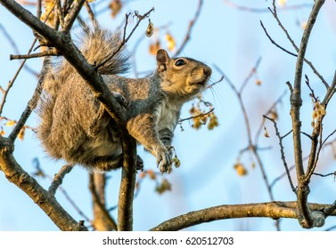 Squirrel Perched in a Tree