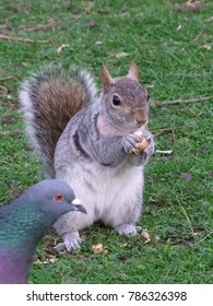 Squirrel photobombed by pigeon