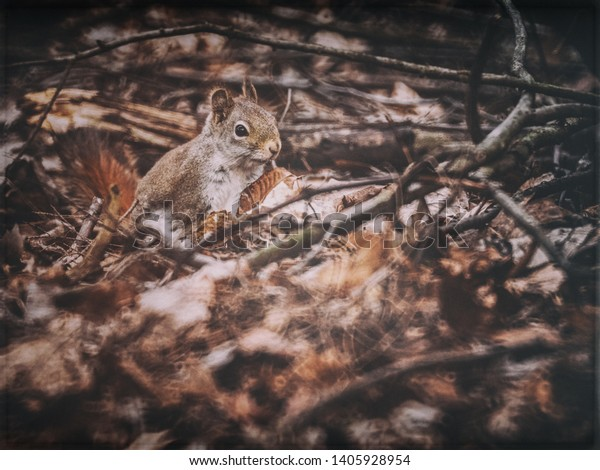 A Squirrel in a pile of dead leaves and twigs up close.