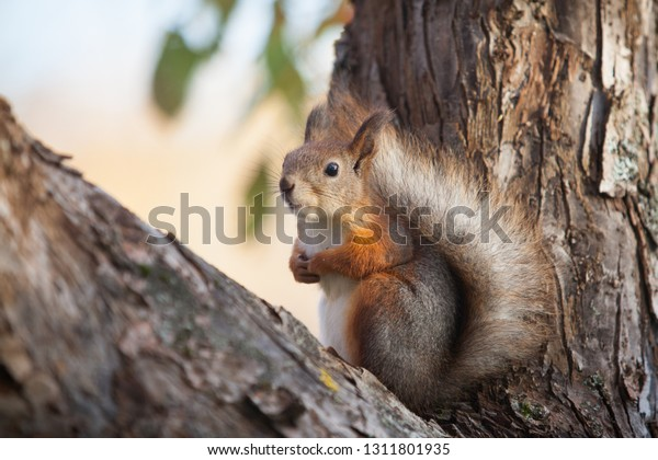 The squirrel is posing on a tree branch and hopes to get nuts