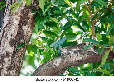 Squirrel Relax