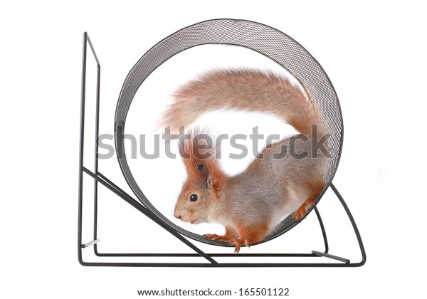 squirrel runs in a wheel on a white background