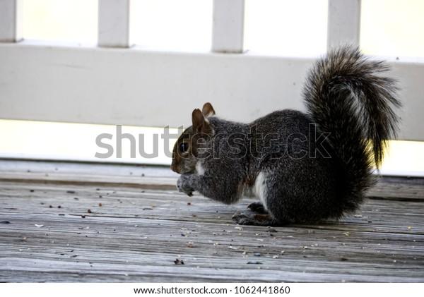 Squirrel Scavenging Seeds