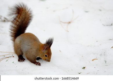 A squirrel searching food in the park