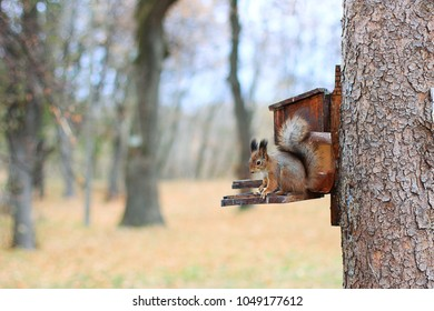 squirrel sits on a manger with seeds