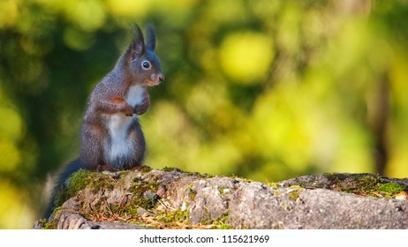 Squirrel sits on a rock