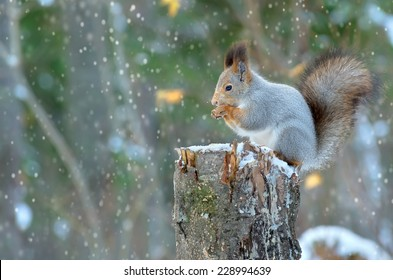 The squirrel sits on a tree stump