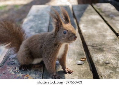 squirrel sits on the wooden bench
