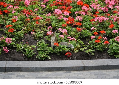 Squirrel sitting in a flower bed