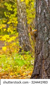 squirrel sitting on a bank in the autumn forest