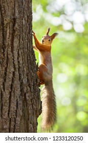 squirrel sitting on a branch in the Park