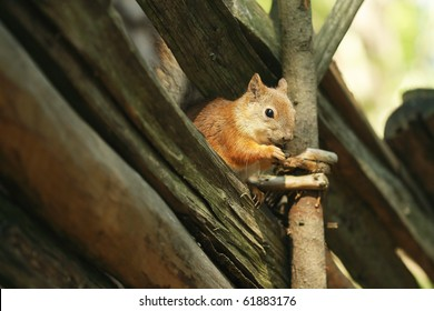 Squirrel sitting on the hurdles eating the nut on the finnish island Seurasaari