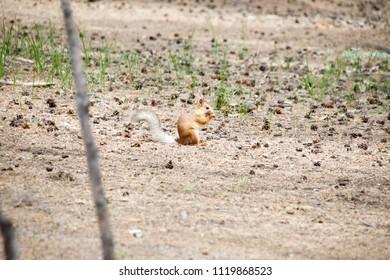A squirrel sitting on a sand