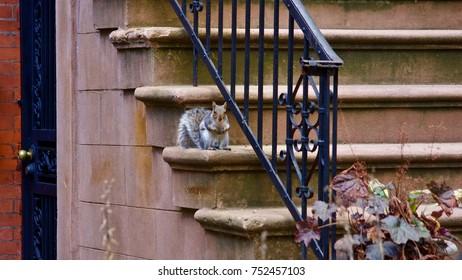 Squirrel sitting on a step in Bedford Stuyvesant. Brooklyn. New York USA
