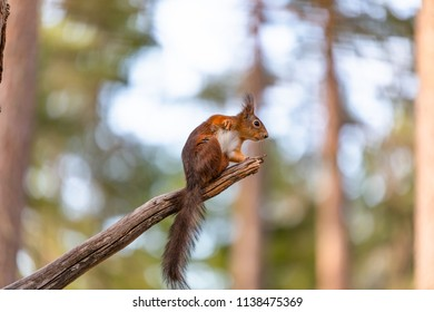Squirrel is sitting on the stick