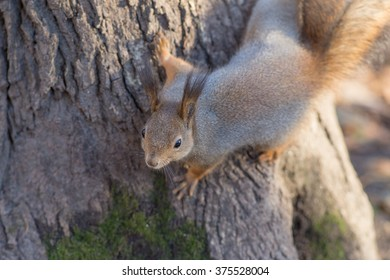 squirrel sitting on a tree close up