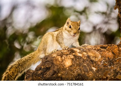 Squirrel sitting on a tree with natural bokeh in the background