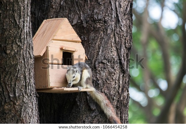 Squirrel Small House On Th Tree Animals Wildlife Parks Outdoor