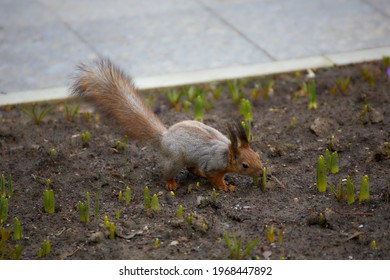 The squirrel sniffs the sprout