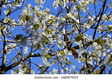 Squirrel and spring flowers climbing a tree