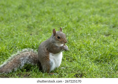 squirrel-standing-on-fresh-green-260nw-2