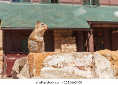 Squirrel standing in a rock in bryce national park
