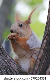 The squirrel take the food from hand in the park, Moscow, year 2014