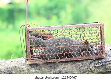 Animal Trap Images Stock Photos Vectors Shutterstock