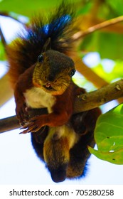 Squirrel in Tree in Colombia Animal