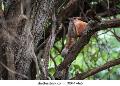 Squirrel in a tree eating a piece of pizza
